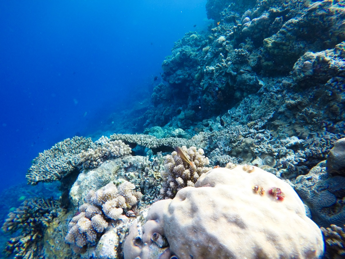 Togian Islands National Park (Underwater Experiences), Sulawesi - Indonesia